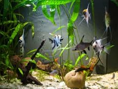 Exploring Aquarium Supplies & Pond Supplies – Different Kits for Different Environments
