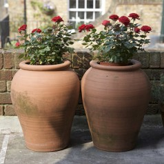Give Your Loved One Potted Flowers For Valentines Day