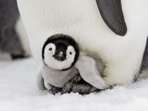 image of cute penguin