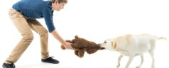 How To Ensure Your Pet Products Are Environmentally Friendly